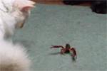 lsa_katze_vs_krabbe.jpg