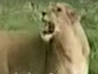 uic_Funny-animals.jpg